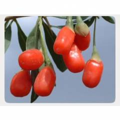 Goji Berries Organic :: The Tibetan Superfood